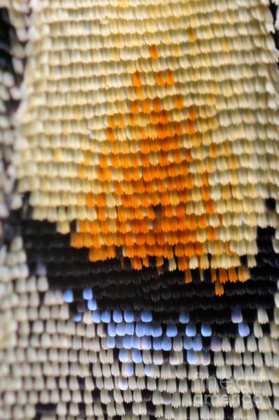Wall Art - Photograph - Extreme Macro Of Swallowtail Butterfly by D. Kucharski K. Kucharska