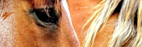 Photograph - Eye And Mane by Jerry Sodorff