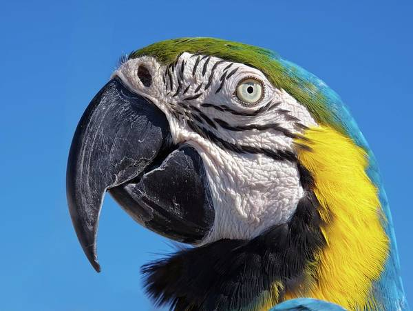 Photograph - Eye Contact - Colorful Parrot's Head by Tatiana Travelways
