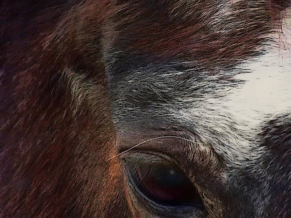 Digital Art - Eye Of A Horse  by Shelli Fitzpatrick