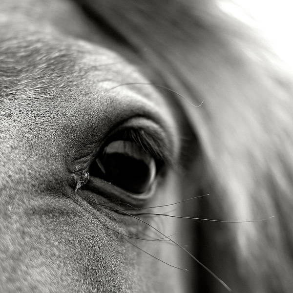 Wall Art - Photograph - Eye Of Horse by Gabriella Nonino