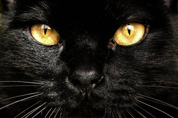 Black Cats Photograph - Eyes by Jorge Maia