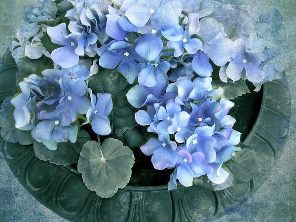 Wall Art - Photograph - Hydrangea In Blue by Jessica Jenney