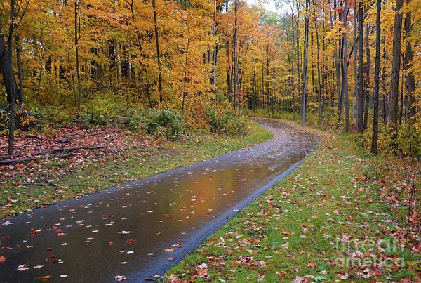 Photograph - Fabulous Fall Rain by Rachel Cohen