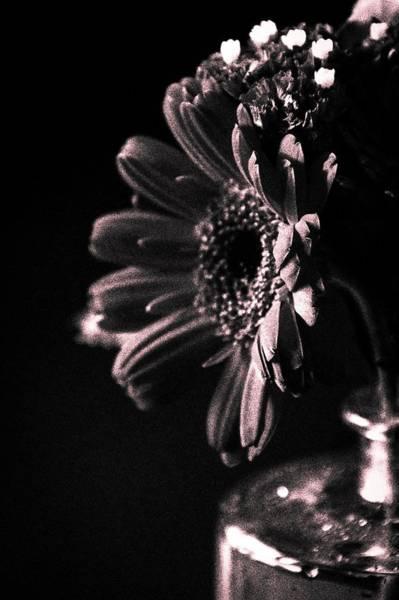 Photograph - Face Light by Terri Hart-Ellis