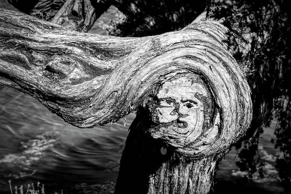 Wall Art - Photograph - Face Like Image On A Gnarled New by Panoramic Images