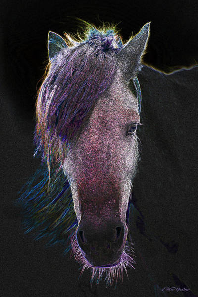 Digital Art - Face Of A Horse 642 -- Painting by Ericamaxine Price
