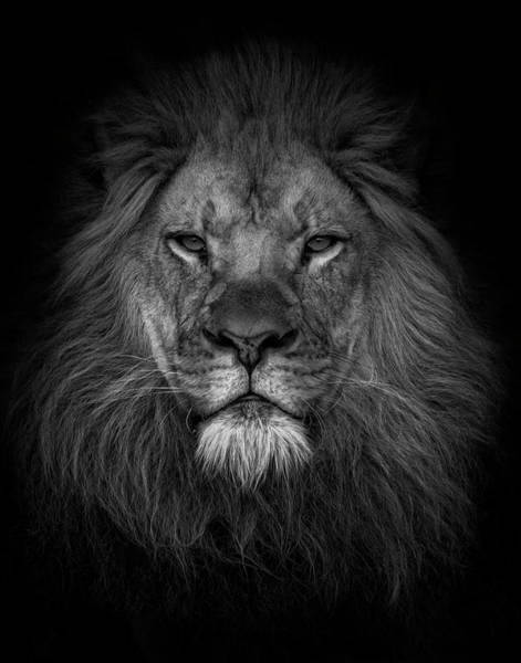 Photograph - Face Of A King  by Kelley Parker