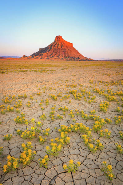 Wall Art - Photograph - Factory Butte Spring Flowers by Johnny Adolphson