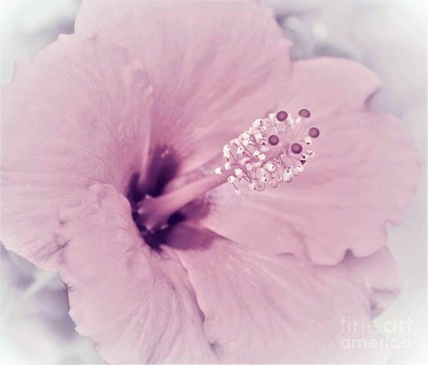 Wall Art - Photograph - Faded Beauty Blossom by Suzanne Wilkinson
