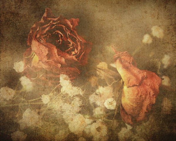 Digital Art - Faded Rose by Keith Smith