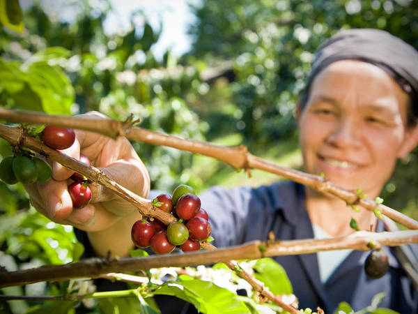 Toothy Smile Photograph - Fair Trade Coffee Farmer by Ranplett