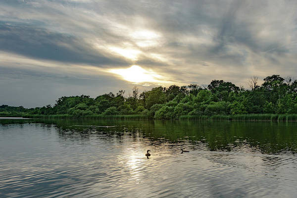 Photograph - Fairhaven Woodland Sun Over The Trees by Scott Lyons
