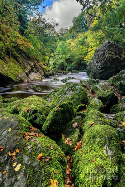 Wall Art - Photograph - Fairy Glen Snowdonia by Adrian Evans