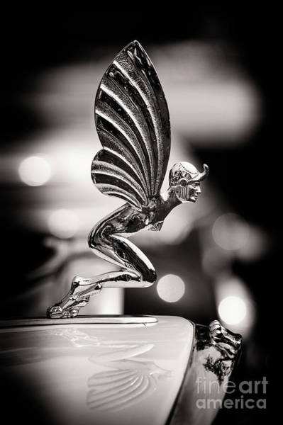 Photograph - Fairy Hood Ornament  by Tim Gainey