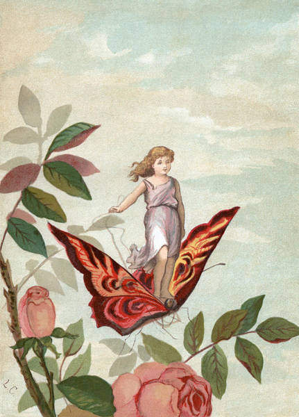 Archival Digital Art - Fairy Riding A Butterfly by Graphicaartis