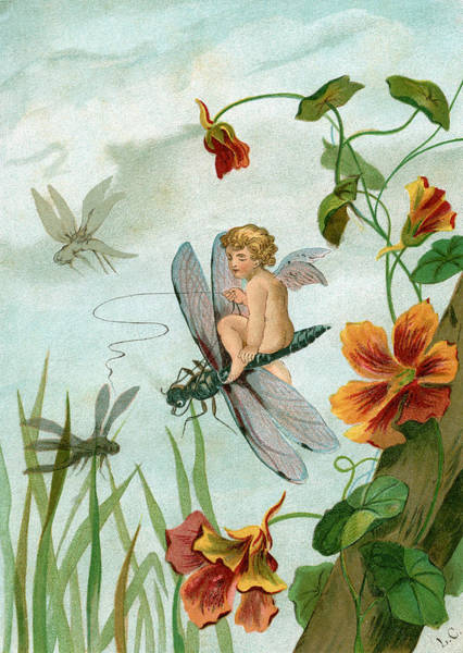 Dragonflies Digital Art - Fairy Riding A Dragonfly by Graphicaartis