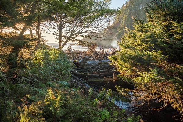 Photograph - Fairy Tale Trail by Kristopher Schoenleber