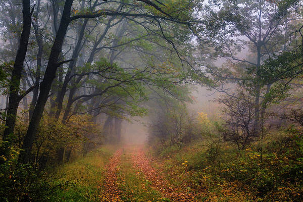 Photograph - Fairy Wood by Evgeni Dinev