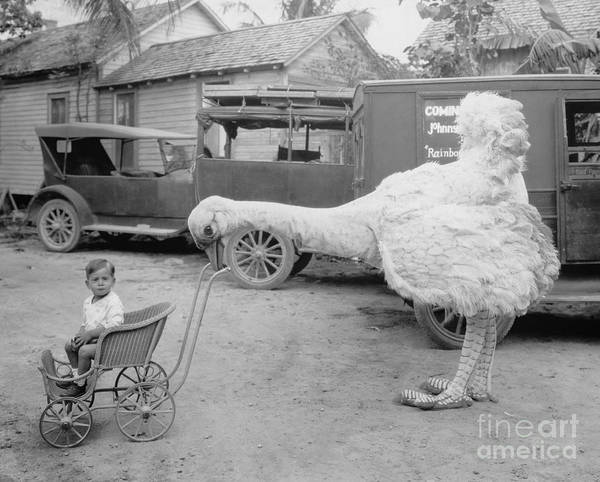 Amusing Wall Art - Photograph - Fake Ostrich Pushing Boy In Stroller by Everett Collection