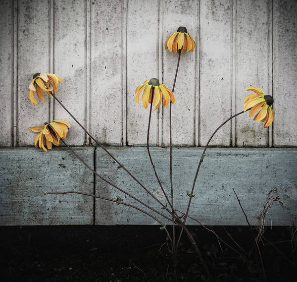 Photograph - Fake Wilted Flowers by Steve Stanger