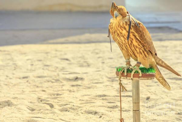 Photograph - Falcon At Falcon Souq Doha by Benny Marty