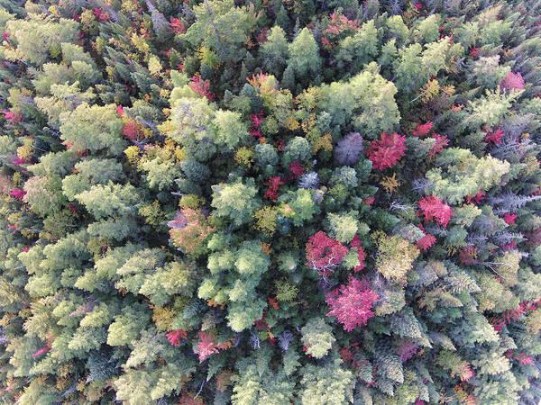 Photograph - Fall Aerial 081501 by Rick Veldman