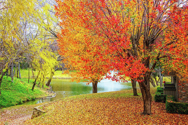 Photograph - Fall All Around by Lynn Bauer