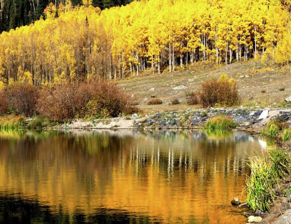 Photograph - Fall Aspen Reflection by Judi Dressler