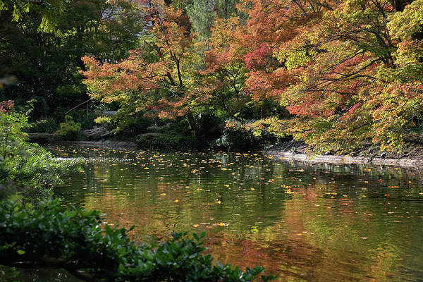 Photograph - Fall At The Japanese Garden by Ricardo J Ruiz de Porras