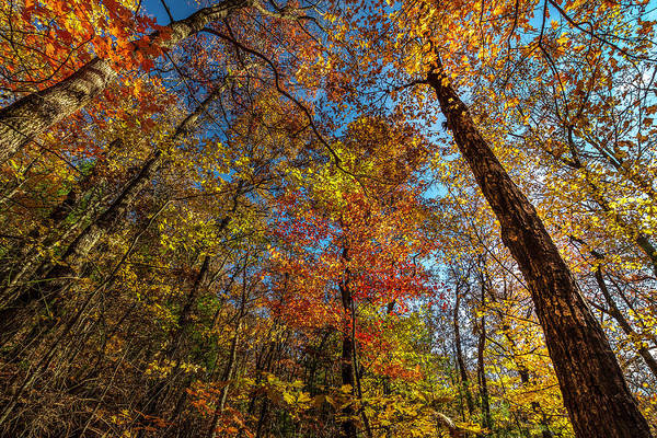 Photograph - Fall Beauty In Georgia by Keith Smith
