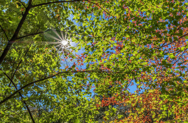 Photograph - Fall Beginnings by Keith Smith