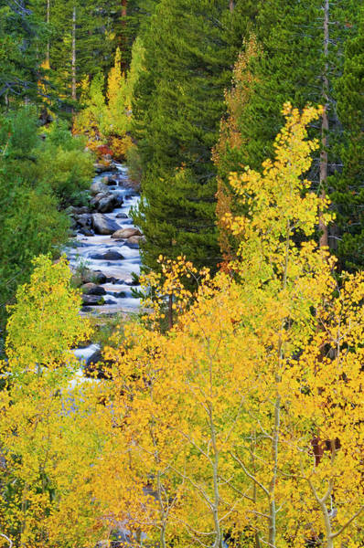 Bishop Photograph - Fall Color Along The South Fork by Russ Bishop