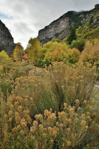 Photograph - Fall Color Beneath The Walls Of Glenwood Canyon At Hanging Lake  by Ray Mathis