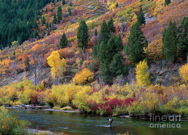Photograph - Fall Color Fisherman Near Provo Utah by Dave Welling
