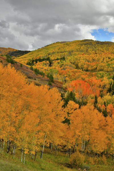 Photograph - Fall Color Galore Along Last Dollar Road by Ray Mathis