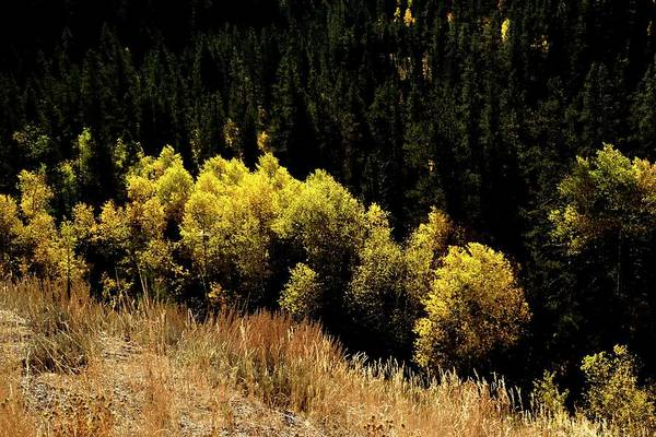 Photograph - Fall Color In The Canyon by Jerry Sodorff