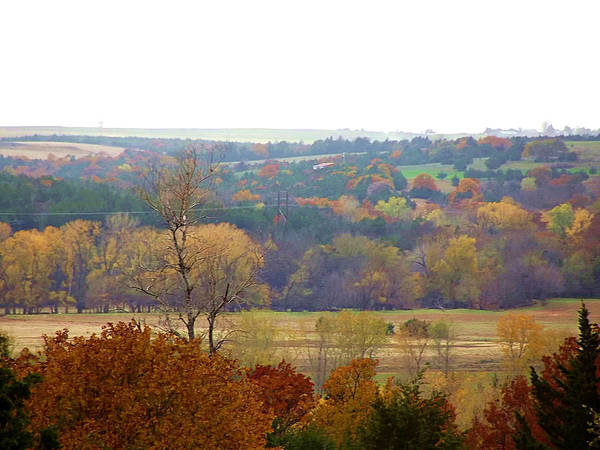 Photograph - Fall Color In The Riverbottom by Shelli Fitzpatrick