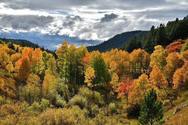 Photograph - Fall Color Near Dallas Divide by Ray Mathis