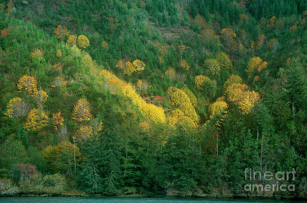 Photograph - Fall Color Near Reedsport Oregon by Dave Welling