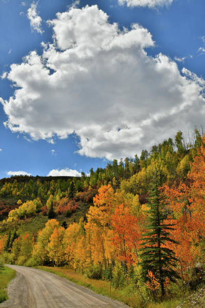 Photograph - Fall Color On Backroads Of Wilson Mesa by Ray Mathis