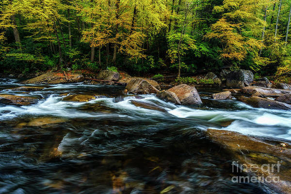 Photograph - Fall Color On Cranberry River by Thomas R Fletcher