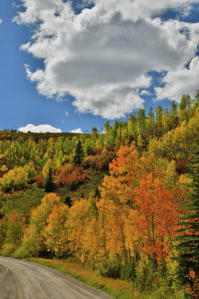 Photograph - Fall Color Road On Wilson Mesa by Ray Mathis