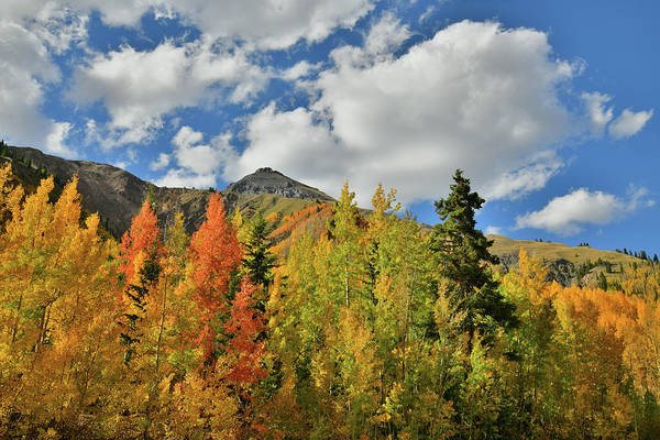 Photograph - Fall Colored Aspens Bask In Sun At Red Mountain Pass by Ray Mathis