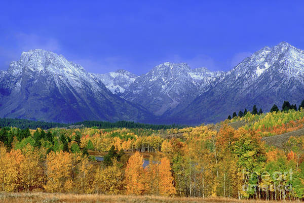 Photograph - Fall Colored Aspens Grand Tetons Np by Dave Welling