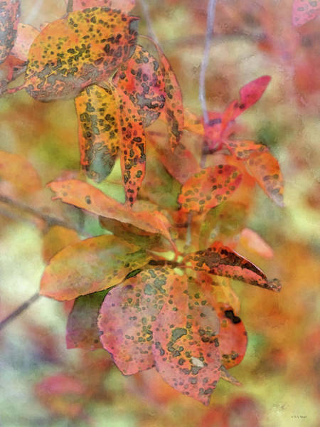 Photograph - Fall Colors 6605 Idp_2 by Steven Ward