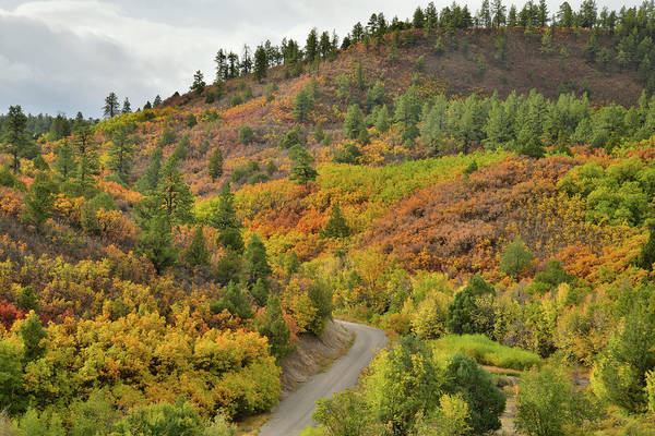 Photograph - Fall Colors Adorn Hills Near Ridgway Colorado by Ray Mathis