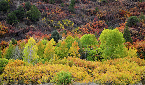 Photograph - Fall Colors Along County Road 5 by Ray Mathis