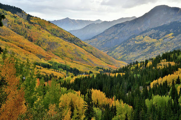 Photograph - Fall Colors Along Million Dollar Highway by Ray Mathis