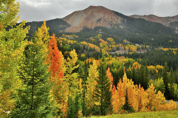Photograph - Fall Colors Along Road To Red Mountain Pass by Ray Mathis